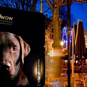 Gwow, shampoo para perros